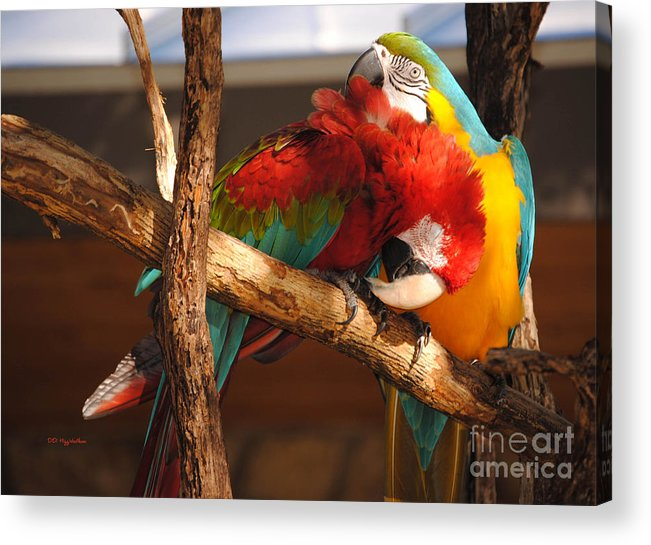 Macaw Acrylic Print featuring the photograph Feels So Good by DiDi Higginbotham