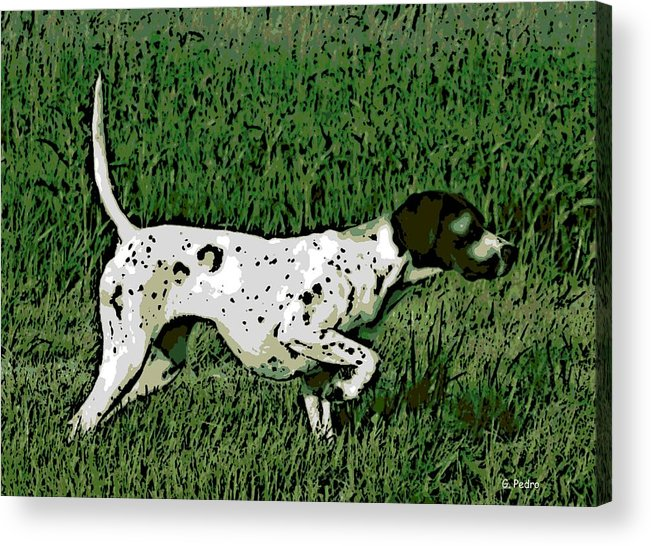 Bird Dog Acrylic Print featuring the photograph On Point by George Pedro