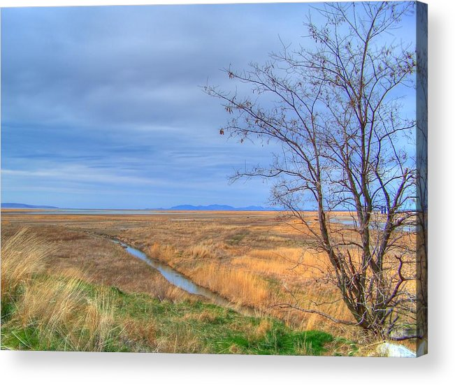 Acrylic Print featuring the photograph Wetlands by Shirlene Davis