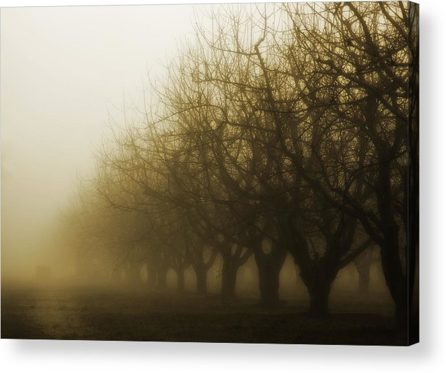 Sepia Acrylic Print featuring the photograph Orchard In Fog by Rebecca Cozart