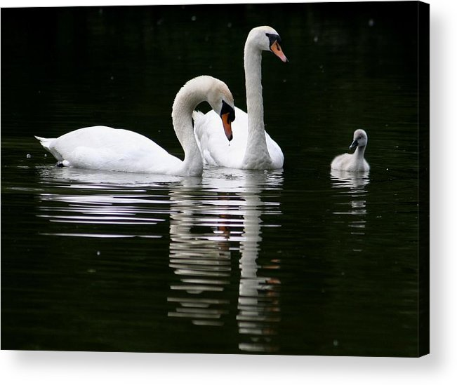 Nature Acrylic Print featuring the photograph Happy Family by Valia Bradshaw