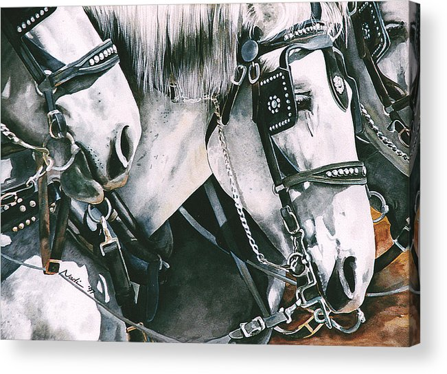 Percheron Acrylic Print featuring the painting 4 Grays by Nadi Spencer