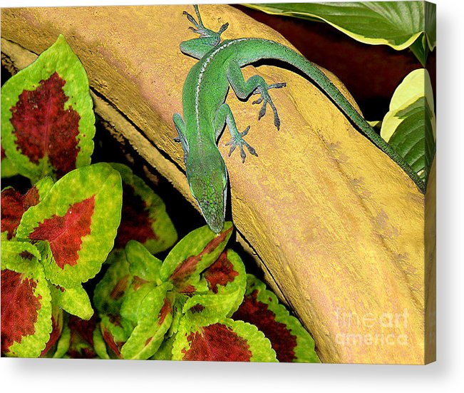 Nature Acrylic Print featuring the photograph Anole Having A Drink by Lucyna A M Green