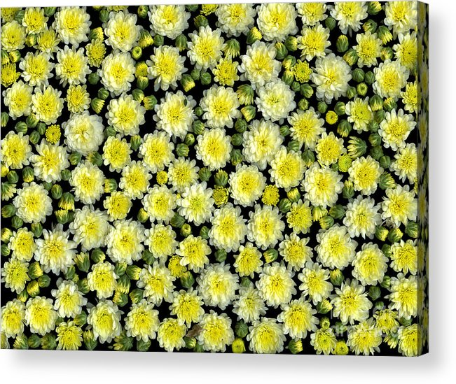 Blossoms Acrylic Print featuring the photograph Blossoms by Christian Slanec