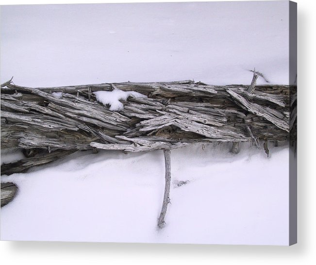 Tree Acrylic Print featuring the photograph Blue Banff-14 by Kevin Callahan