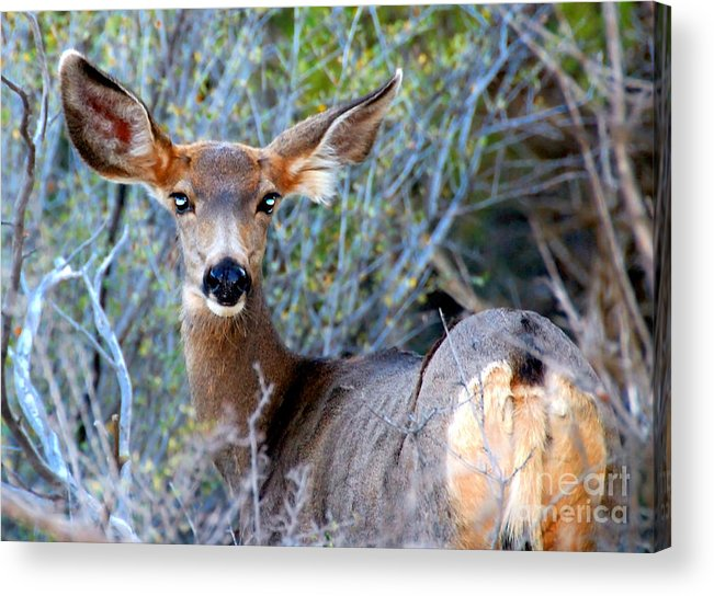 Bright Eyes Acrylic Print featuring the photograph Bright Eyes by David Lee Thompson