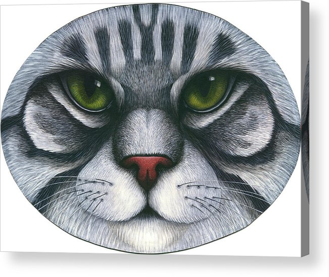 Gray Tabby Cat Acrylic Print featuring the painting Cat Oval Face by Carol Wilson