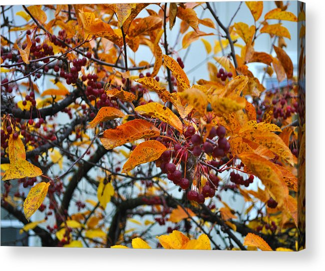 Berries Acrylic Print featuring the photograph Fall Berries by Tim Nyberg