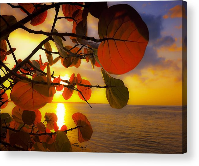 Beach Acrylic Print featuring the photograph Glowing Red II by Stephen Anderson