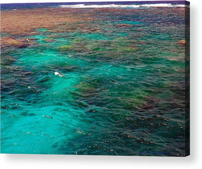 Australia Acrylic Print featuring the photograph Great Barrier Reef 2542 by PhotohogDesigns
