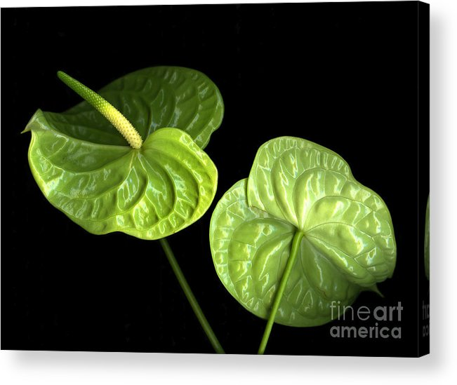 Botanicals Acrylic Print featuring the photograph Green Berets by Christian Slanec