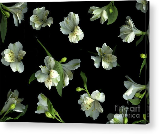 Scanography Acrylic Print featuring the photograph Harmony by Christian Slanec