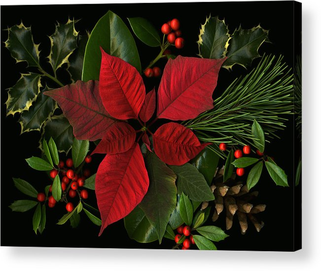 Poinsetta Acrylic Print featuring the photograph Holiday Greenery by Deborah J Humphries