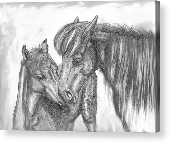 Mother Acrylic Print featuring the drawing Mother And Foal by Crystal Suppes