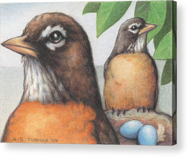 Birds Acrylic Print featuring the drawing Mr And Mrs Robin Are Expecting by Amy S Turner