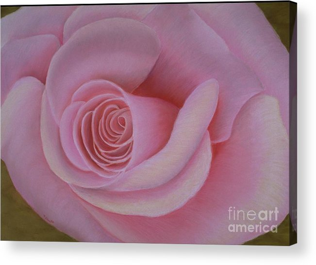 Rose Acrylic Print featuring the painting Pink Blush by Mary Erbert