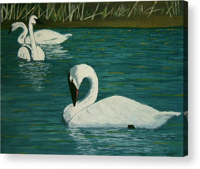 Swans Acrylic Print featuring the painting Preening Swans by Robert Tower
