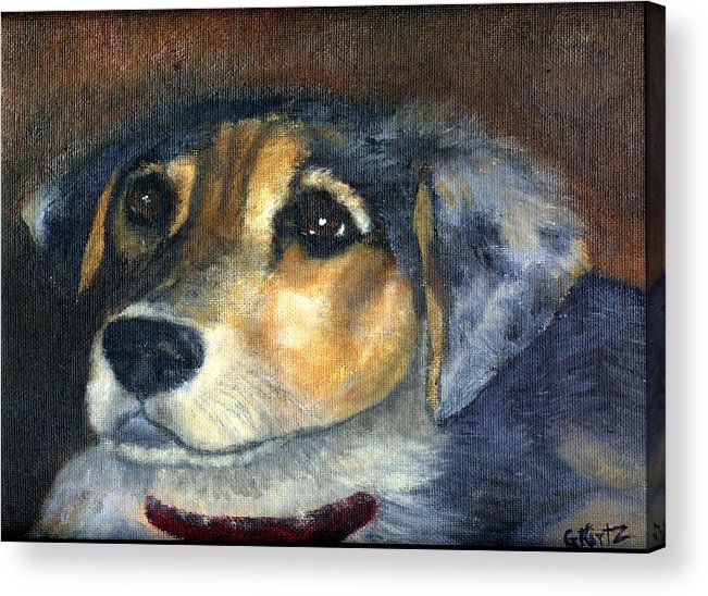 Dog Acrylic Print featuring the painting Roxie by Gail Kirtz
