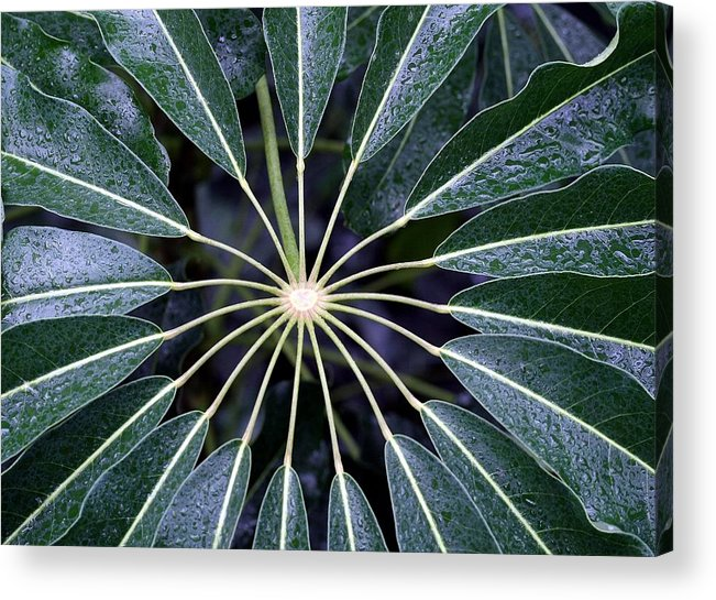 Plant Acrylic Print featuring the photograph Secret by Mitch Cat