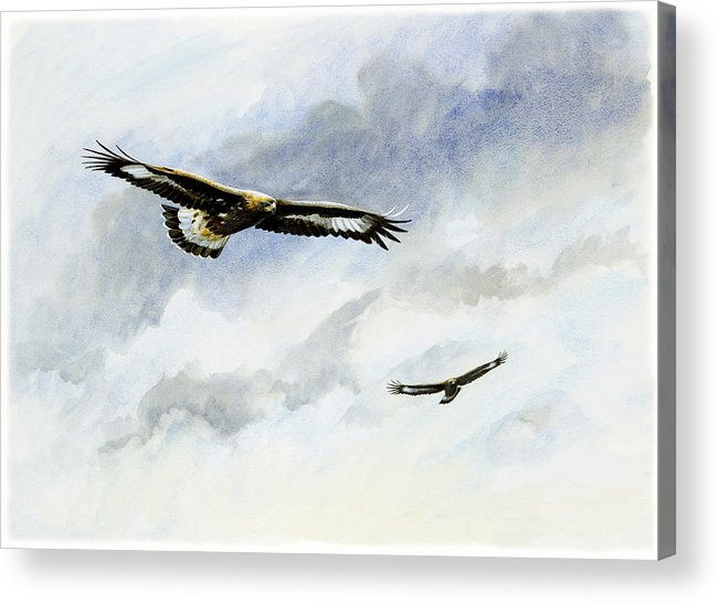 Eagles Acrylic Print featuring the painting Soaring Golden Eagles by Dag Peterson