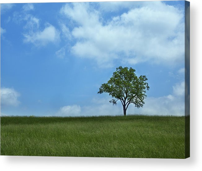Tree Acrylic Print featuring the photograph Solitary Tree by Emil Davidzuk