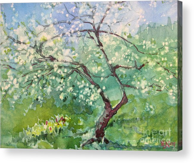 Plum Tree Acrylic Print featuring the painting Spring Plum by Elizabeth Carr