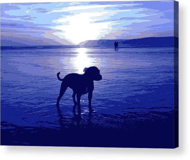 Staffordshire Bull Terrier Acrylic Print featuring the digital art Staffordshire Bull Terrier On Beach by Michael Tompsett