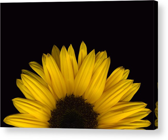 Scanography Acrylic Print featuring the photograph Sunflower Rising by Deborah J Humphries