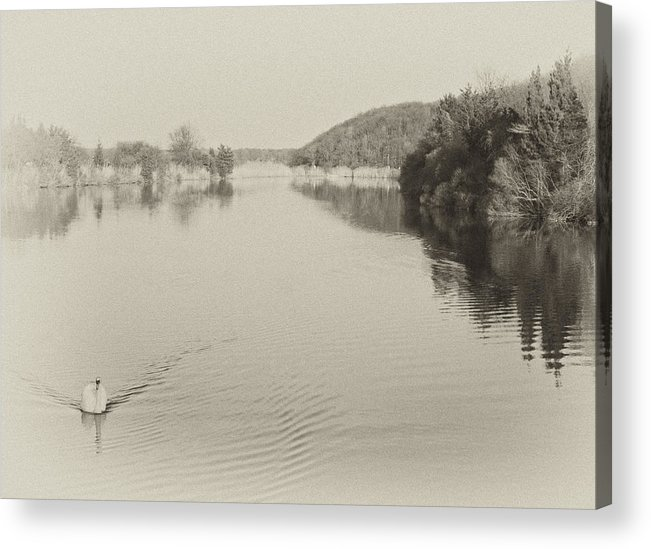 Swan Acrylic Print featuring the photograph Swan On Nissequogue River by Jeff Singer