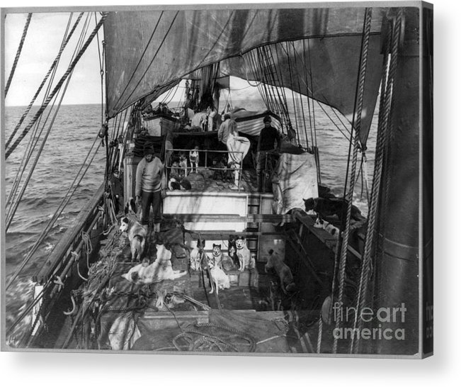 1910 Acrylic Print featuring the painting Terra Nova Expedition by Granger