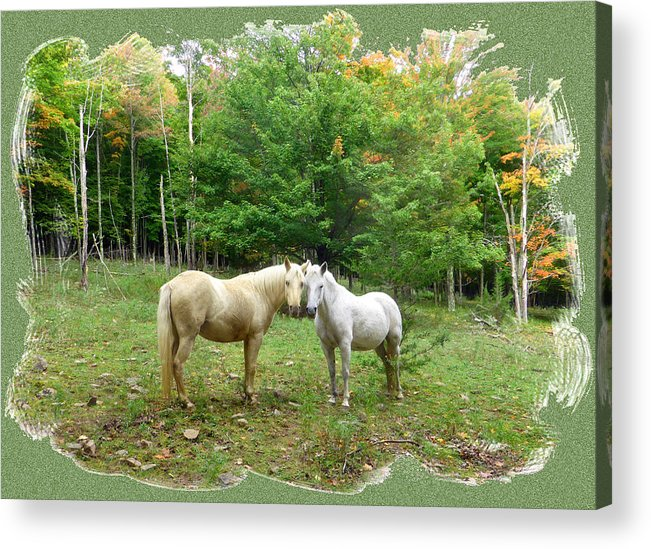 Horses Acrylic Print featuring the photograph The Mares Watch by Patricia Keller
