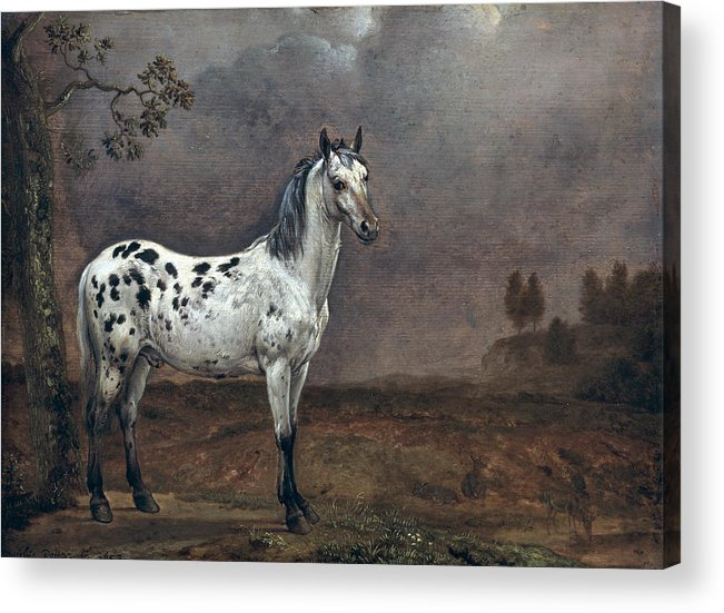 The Acrylic Print featuring the painting The Piebald Horse by Paulus Potter