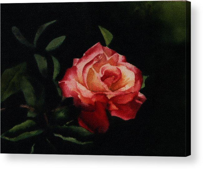 Floral Acrylic Print featuring the painting The Rose by Patricia Halstead