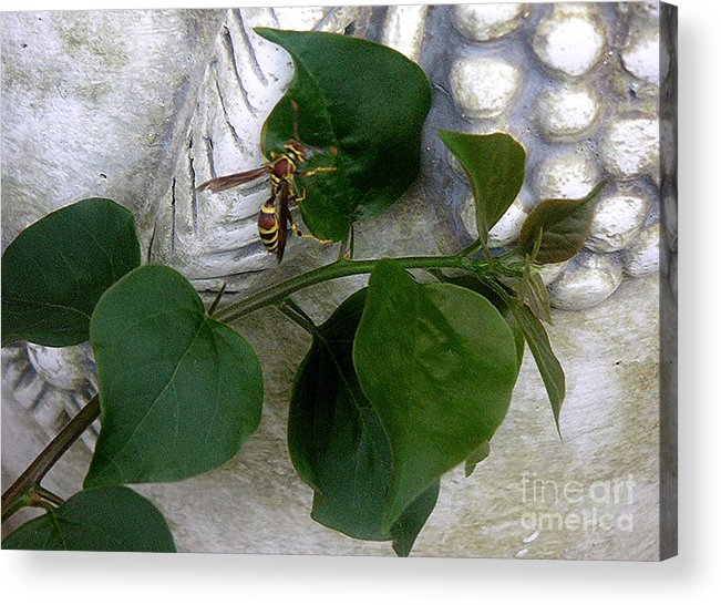 Nature Acrylic Print featuring the photograph The Visitor by Lucyna A M Green