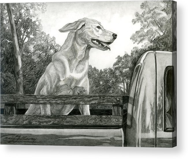 Dog Acrylic Print featuring the painting Truck Queen Study by Craig Gallaway