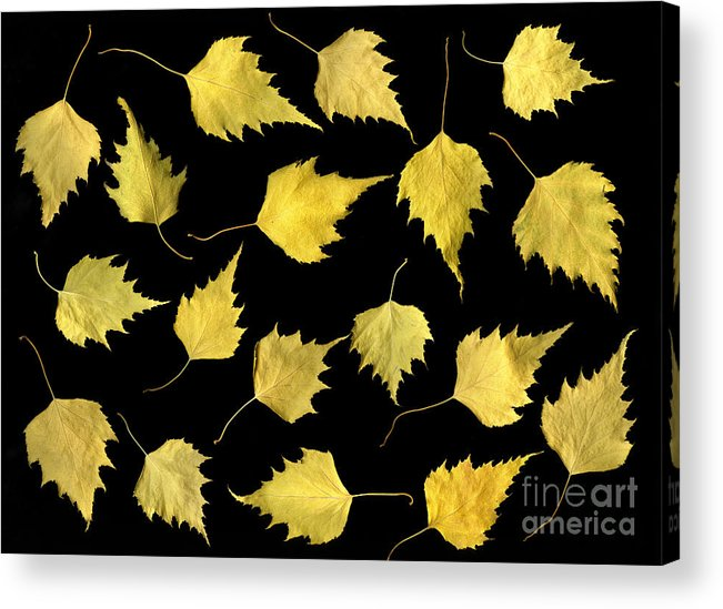Scanography Acrylic Print featuring the photograph When Leaves Grow Old by Christian Slanec
