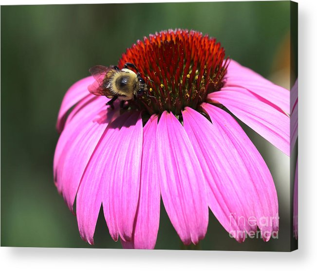 High Line Acrylic Print featuring the photograph A Bee On The Highline by Steven Spak