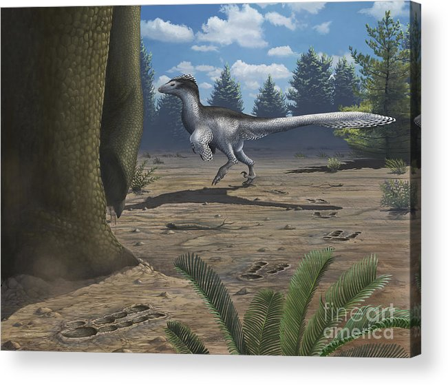 Paw Prints Acrylic Print featuring the digital art A Deinonychosaur Leaves Tracks by Emily Willoughby