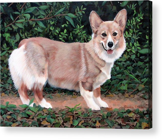 Dog Acrylic Print featuring the painting A Portrait Of Pickle by Sandra Chase
