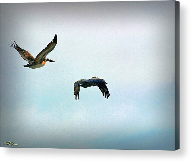 Coastal Scene Acrylic Print featuring the photograph Birds Of A Feather by Phil Mancuso