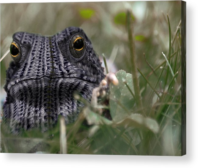 Toad Acrylic Print featuring the photograph Clothed Toad by Paul Geilfuss