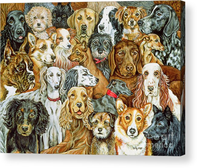 Dog Spread Acrylic Print featuring the painting Dog Spread by Ditz