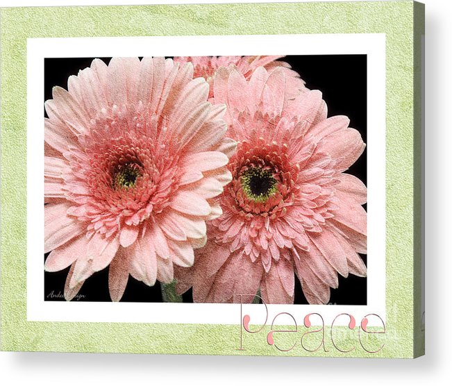 Gerber Acrylic Print featuring the photograph Gerber Daisy Peace 4 by Andee Design