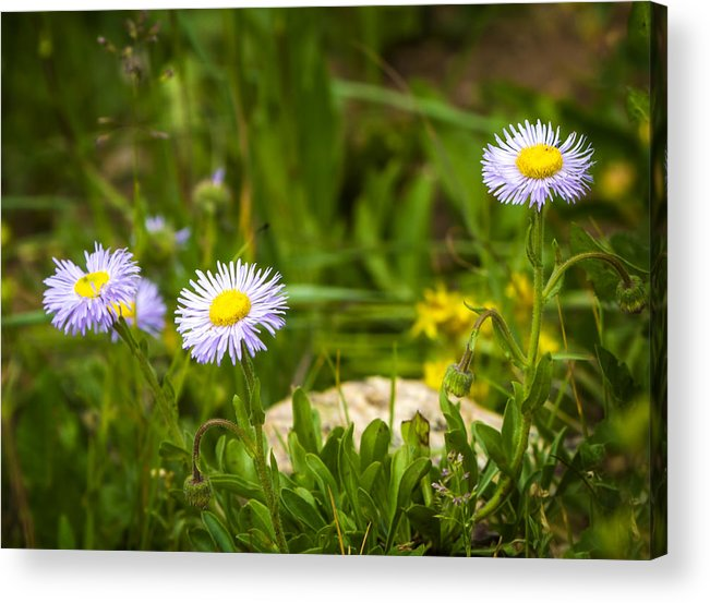 Flowers Acrylic Print featuring the photograph Golden Afternoon by Mark Andrew Thomas