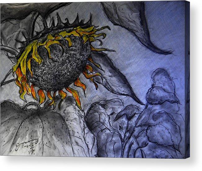 Hanging On To Life - Sunflower Acrylic Print featuring the drawing Hanging On To Life - Sunflower by Jose A Gonzalez Jr