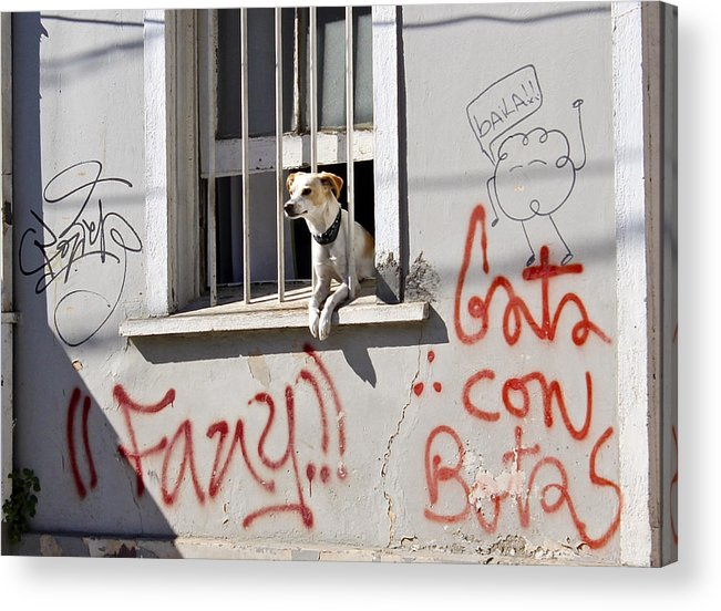 Dog Acrylic Print featuring the photograph How Much Is That Doggie In The Window? by Kurt Van Wagner