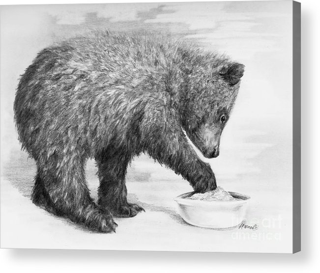 Bear Acrylic Print featuring the drawing Just Right by Meagan Visser
