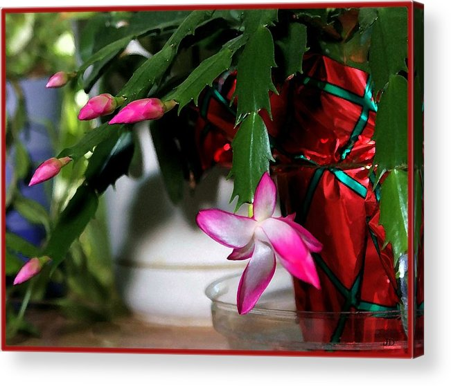 Cactus Acrylic Print featuring the photograph The Christmas Cactus by Jim Darnall