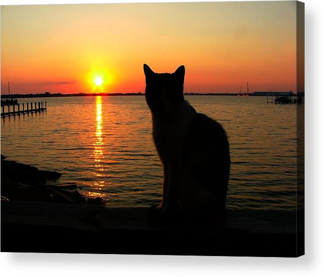 Cats Acrylic Print featuring the photograph Waiting For The Shrimpers To Come In With Their Catch by Julie Dant