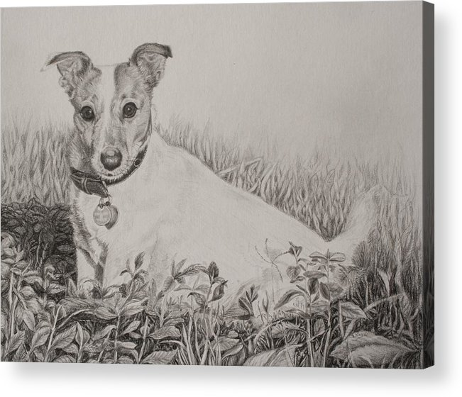 Roena King Acrylic Print featuring the drawing Youtube Video - Tobie by Roena King